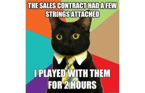 businesscat_375931